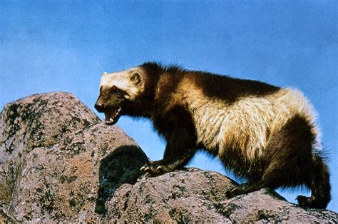 Blok888: Top 10 Rarely Known Artic Animals
