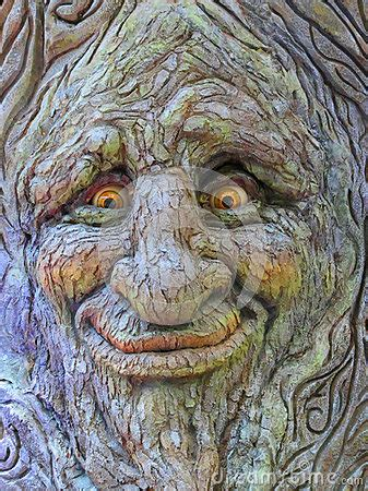 Tree Face Royalty Free Stock Photography - Image: 34969537